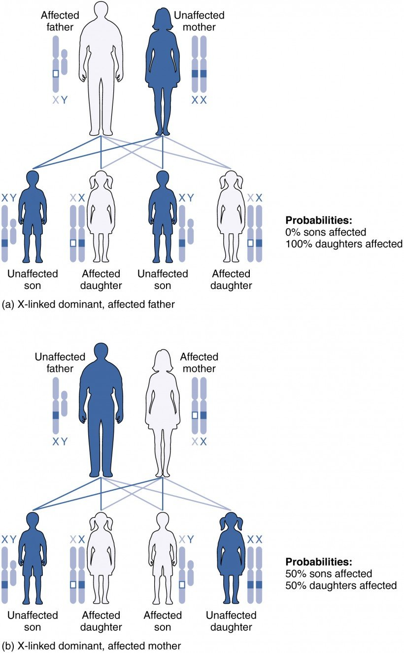 genetic patters of inheritance - x-linked dominant