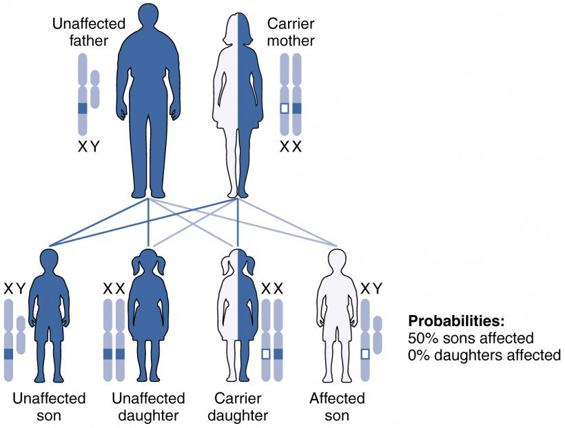 genetic patters of inheritance - x-linked recessive